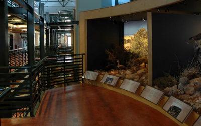 Musée de paléontologie de Réthymnon